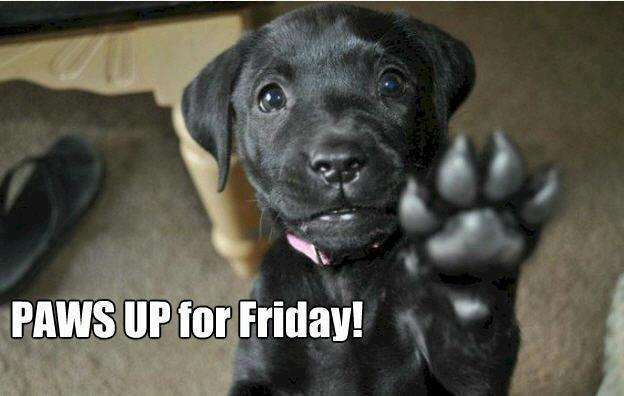 Paws Up for Friday!