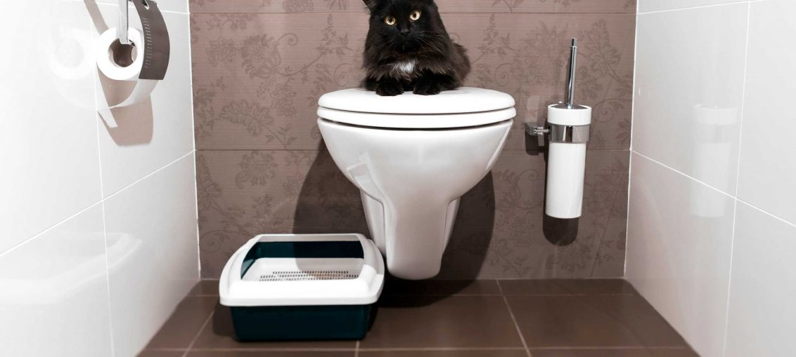 Train your cat to use the Toilet!