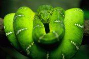 Dangerously Venomous Snakes